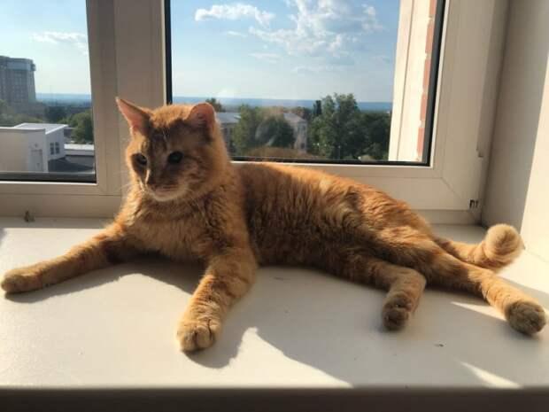 Тощий больной кот постоянно подходил к окну и смотрел, как живут люди