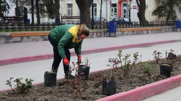 Продолжаются работы по озеленению Феодосии