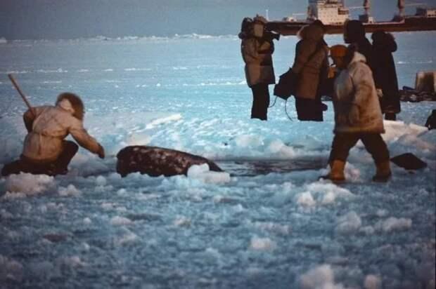 3 добрых факта о том, как США и СССР объединились ради спасения китов