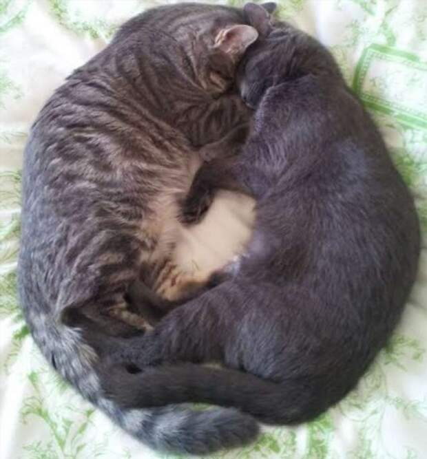 20 фото животных, которые просто хотели поспать, но случайно очаровали всех вокруг