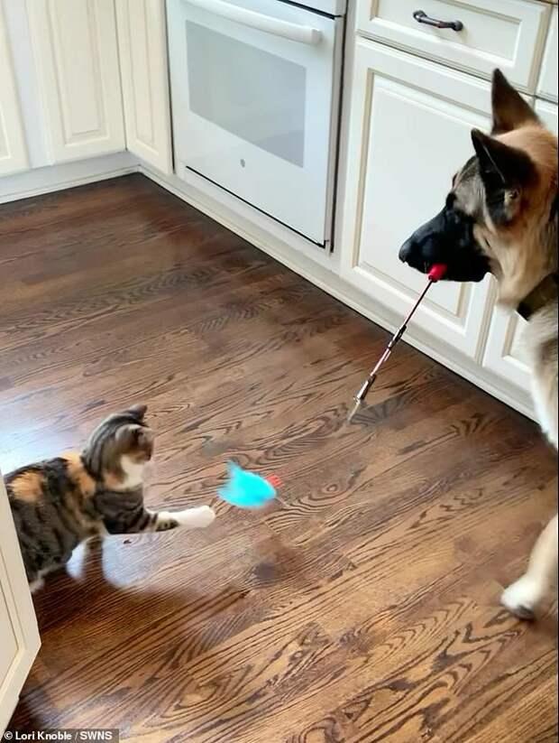 Собака помогла социализироваться брошенному котенку и научила его играть по-кошачьи