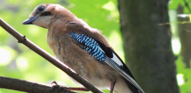 Птица. Фото: mos.ru