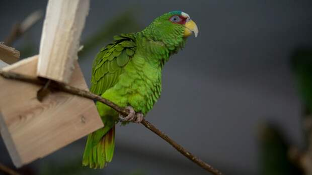 Житель Перми спас улетевшего попугайчика от холода и вернул домой