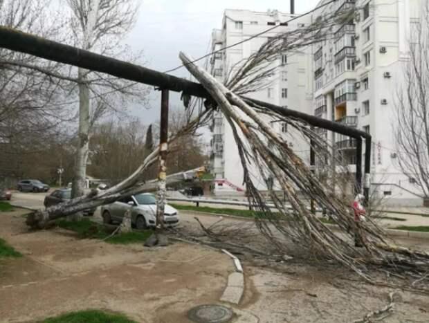В Севастополе ветер валит деревья на газопровод (ФОТО)