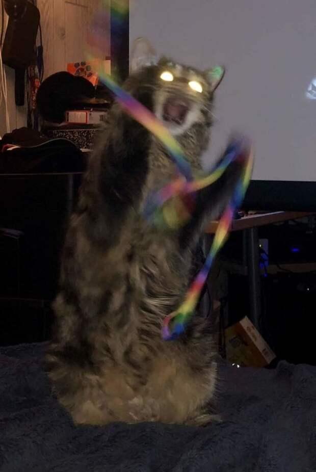 Кошки способны гениально сыграть как приступ сумасшествия... гифки, коты, фото