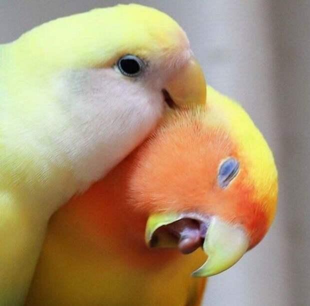 Курьезы с птичками, которые оказались тем еще веселым хулиганьем