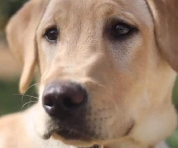 «Он спас мне жизнь!»: люди решили «оживить» преданного пса-героя с помощью медицинской процедуры
