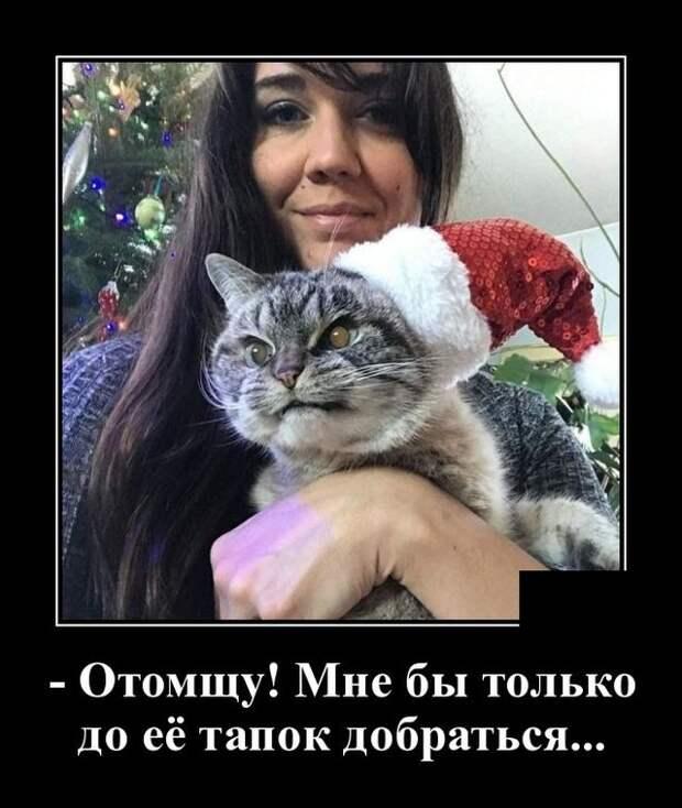 Демотиватор про злого кота