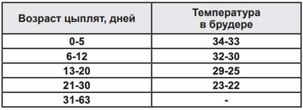 Выгодно ли содержать бройлеров? Расчеты по выращиванию от фермера Марии Бахмутовой