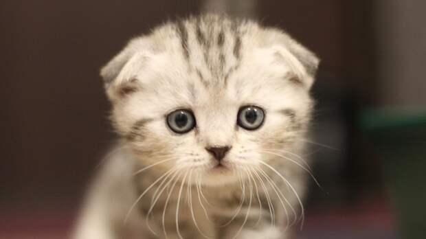 Россиянам перечислили три основных способа избавиться от аллергии на кошек