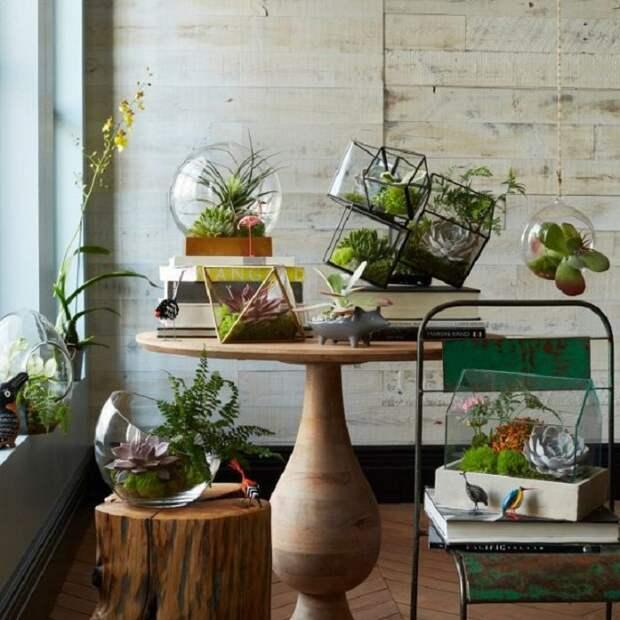 Потрясающий мини-сад дома, что смотрится очень красиво и явно понравится.