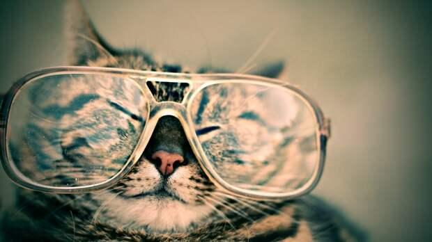 Кошки — путешественники