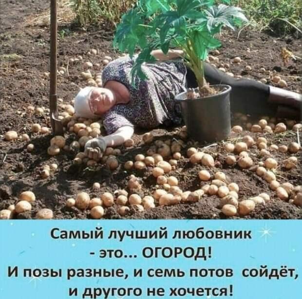 Огород лучший любовник