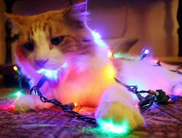 Грызли животные, не любят, новый год, планы, смешные, фото