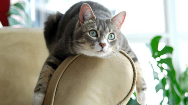 Что такое кошачьи антицарапки?