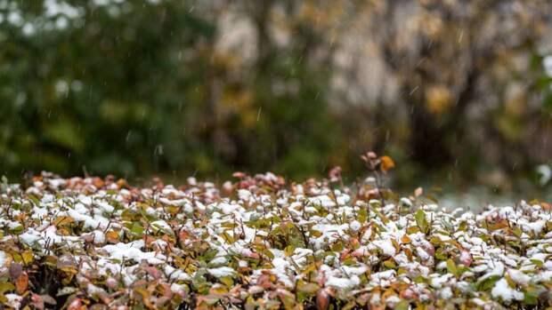 Гидрометцентр: первый снег может выпасть в Европейской России во вторник
