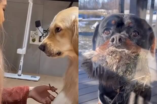 10+ смешных видео о том, какими эмоциональными бывают собаки