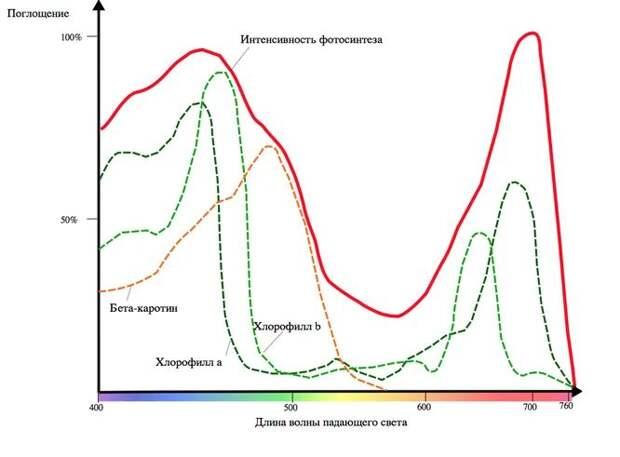 Спектр действия фотосинтеза на Земле
