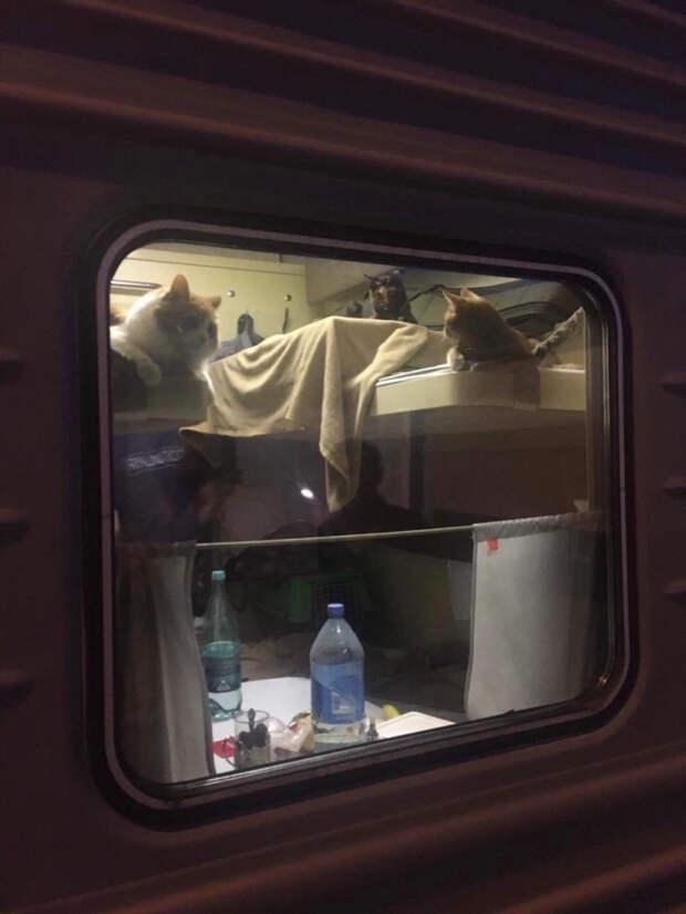 В поезде Москва-Анапа коты заняли все купе