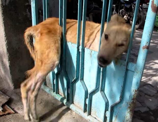 Спасение собаки, застрявшей в заборе