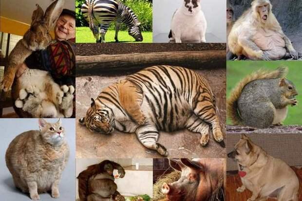 Самые тяжелые домашние животные