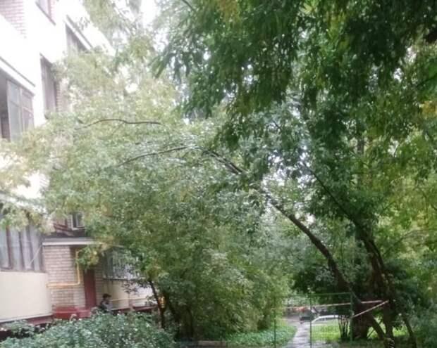 На улице Рогова дерево проросло в балкон жилого дома