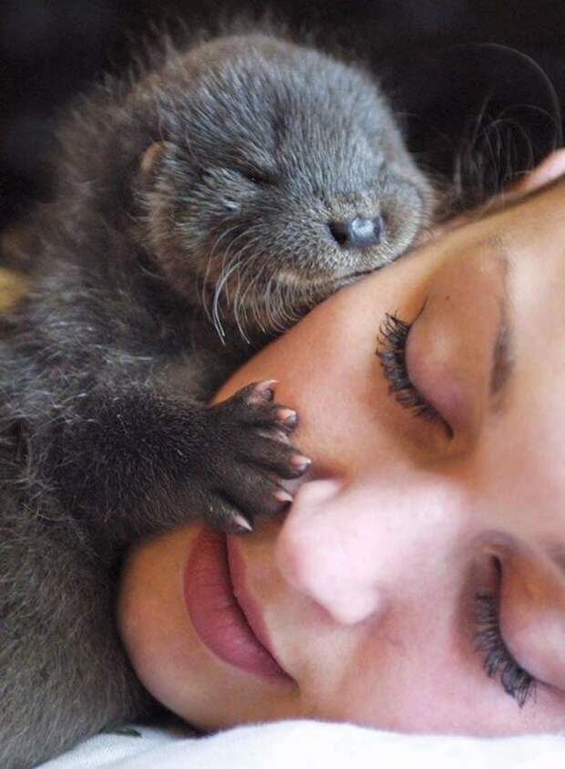 20+ животных, которые на 90 % состоят из очарования