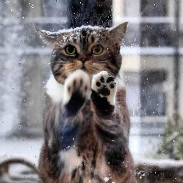 Кошка пришла в кафе просить помощи людей, ведь ее малыши замерзали на морозе!