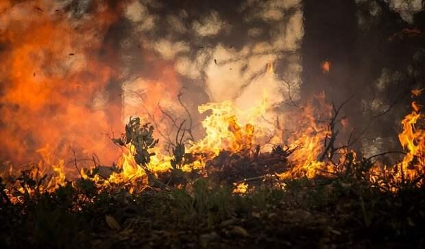 ВНовосибирской области заявили остабилизации пожарной ситуации врегионе