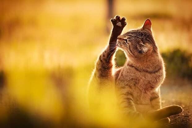 26. Кошка не бреет ноги. жены, интересное, кошки, юмор