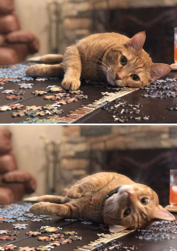 Кошки и пазлы