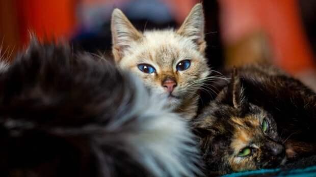 Названы продукты, которые нельзя давать кошкам