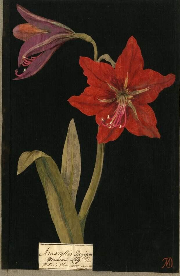 Мэри Делейни и её бумажные цветы