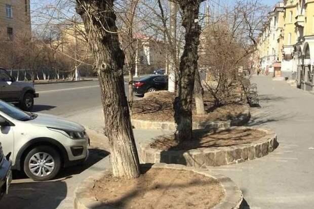 ДМРСУ уберёт тополя возле художественного салона на улице Ленина в Чите