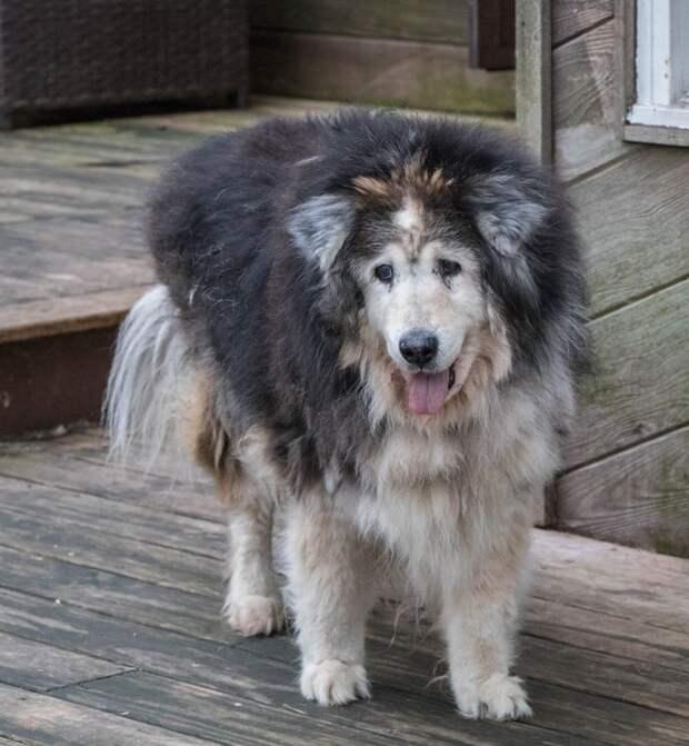 Люди спасли непонятное животное! Чтобы понять, собака ли это, сделали генетический тест…