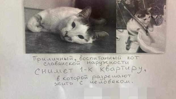 Кот подал объявление о поиске жилья в Новосибирске