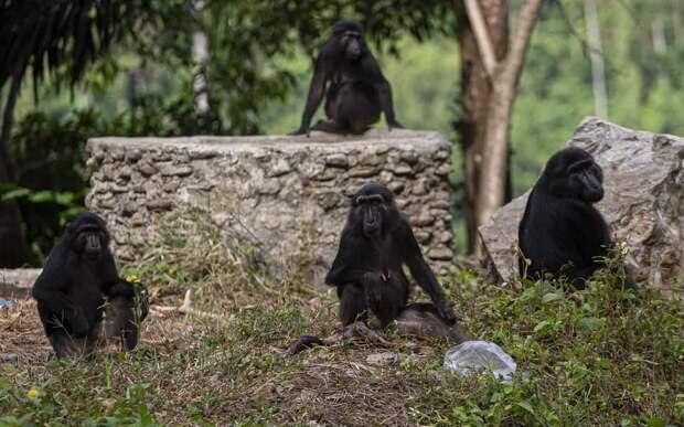 Жители Индии в костюме медведей решили запугать обезьян