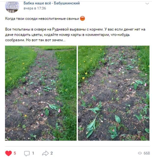 Вандалы уничтожили клумбу с тюльпанами на Рудневой