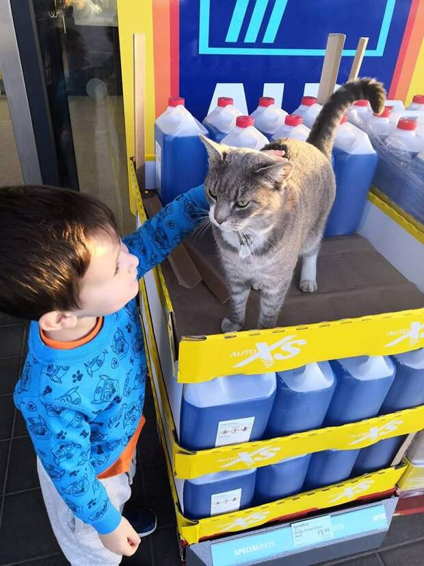 мальчик гладит кота