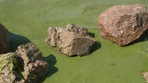 Финский залив окрасился в ярко-зелёный цвет