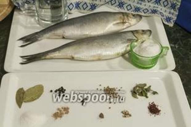 Выберем 2 хороших неповреждённых крупных сельди. Вымоем размороженную рыбу. Отвесим необходимое количество специй, соли и сахара.