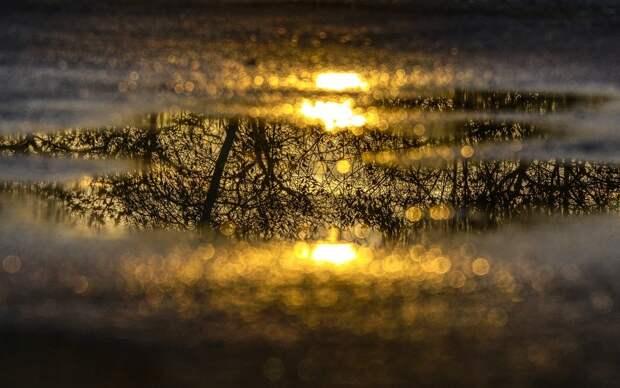 Лужа Воды, Зеркальное Отображение, Отражение, Дерево