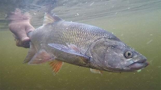 Амнистия...  лето, природа, рыбалка, хобби