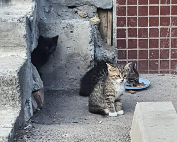 В этом дворе уже знают, как наверняка бороться с котами... Умоляем о помощи!