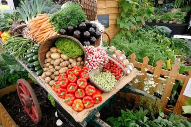Интересные факты о садоводстве