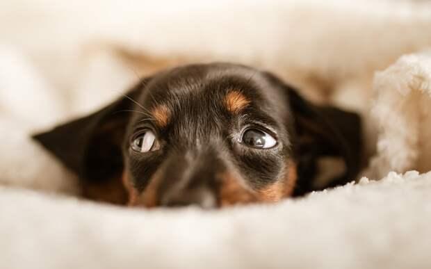 5+ неожиданных вещей, которые могут вызвать стресс у собаки