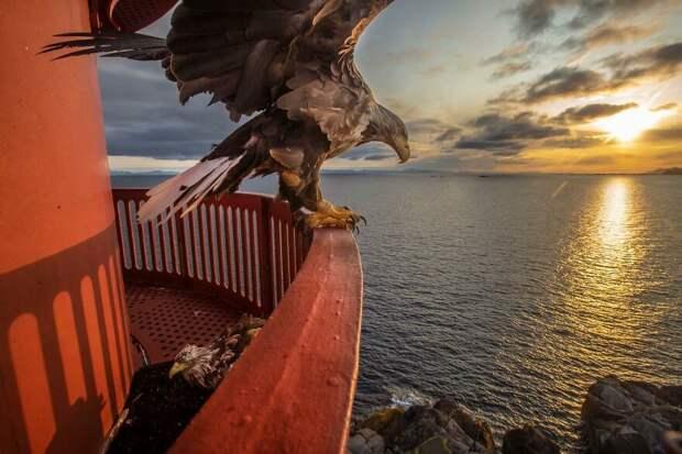 45 эмоциональных фотографий спремии «Лучшие европейские фотографии дикой природы-2020»