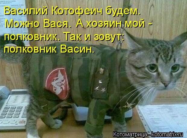 Котоматрица: Василий Котофеич будем.  Можно Вася.  А хозяин мой -  полковник. Так и зовут: полковник Васин.