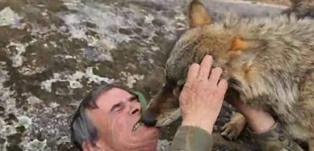 Испанский «Маугли» хочет вернуться к волкам, разочаровавшись в людях в мире, волки, животные, жизнь, история, люди, природа