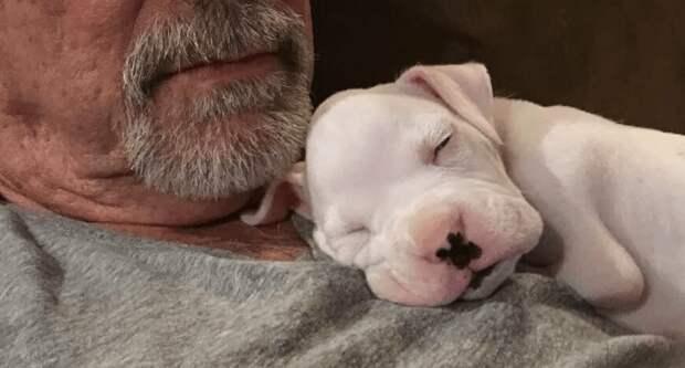 Ветеринар хотел усыпить щенка, родившегося без передних лап. Но хозяин не согласился!